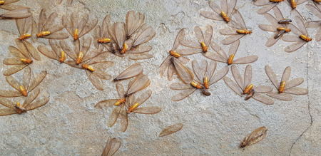 Moths are flying in to swarm around the lamps during the time of rain. mayfly   drop down to the floor below. Termites are a lifetime of  Moths.