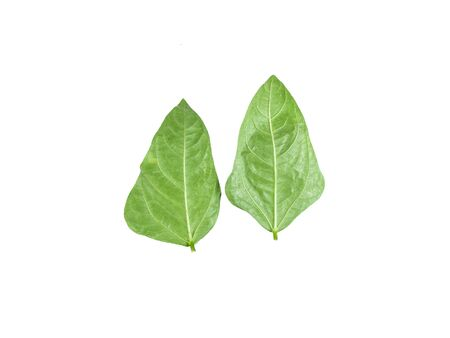 Green bean leave and pods of the beans on isolated white background. dicut