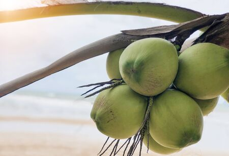 on selective soft focus of coconut on the beach images of summer tourism