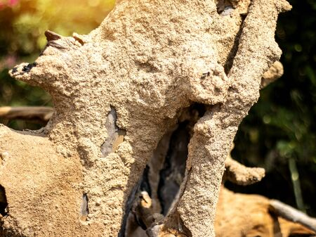 On selective focus of the termite of the dry dead wood. Insects, termites eat wood The damage to homes Banque d'images - 139899945