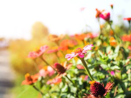 On selective focus of Colorful flowers On the bright sun in the public park. Banque d'images - 140171594