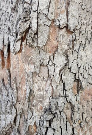 The bark of the tree A large trunk Banque d'images - 140172786