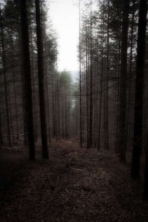 an eerie forest in the palatinate