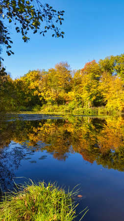 An autumn landscape. Park in Autumn. The bright colors of autumn in the park by the lake. Фото со стока
