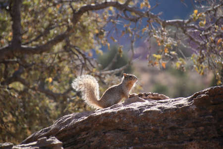 Squirrel Seated on a Rock with sunlight in Zion National Park, Utah