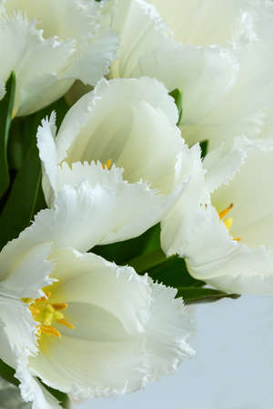 yellow stamens: White tulips with green leaves, yellow stamens, Photographed close, bouquet