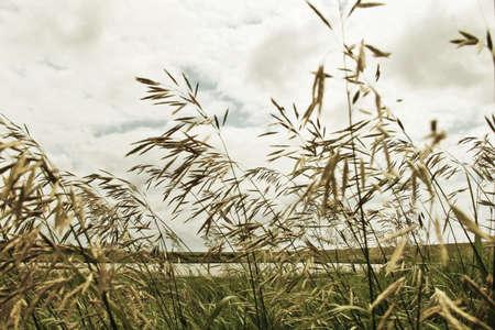 Green fodder, herb, summer, horizon, blue sky, clouds, asphalt, road, green grass, ears, close-up photography photo