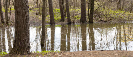 Trees are beautifully reflected in the water. Spring. Selective focus