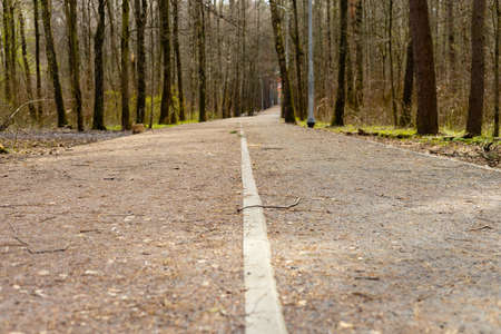 Road in the forest, park, path. Selective focus.