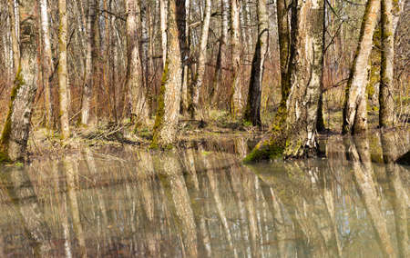 Forest, spring, the image of a beautiful forest, the trees are reflected in the water. 免版税图像
