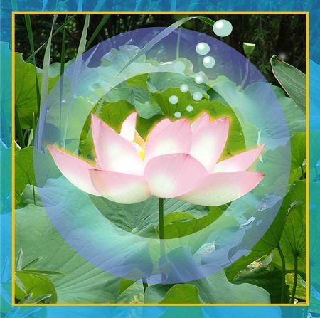 blumen: Lotus power