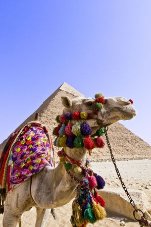 cheops: camel and pyramid of gizeh