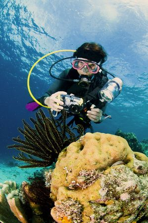 diver with camera along the reef,  underwater photographer, lembeh, asia photo