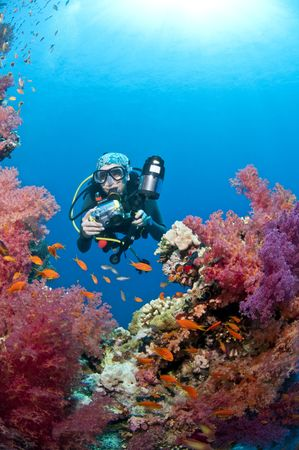 anthias fish: diver and underwater photos, red sea, egypt