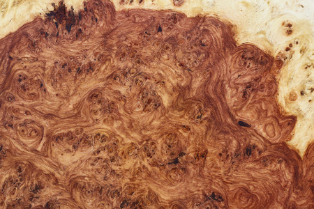 Amboyna wood burl mix red and yellow Stock Photo