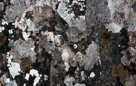 abstract background with spotted stone covered with moss