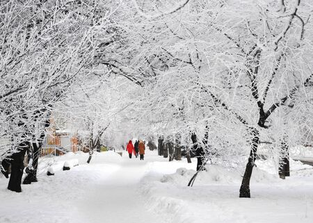 Beautiful trees covered with snow in winter park for your design