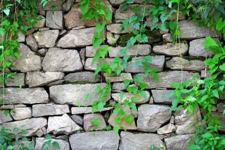 stone wall with ivy growing on it