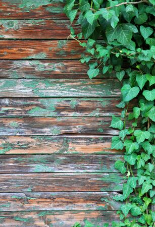 wall with ivy growing on it for your design