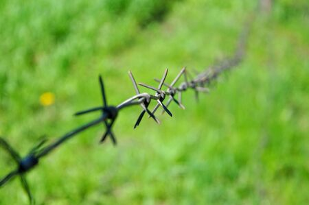 barbed wire on the background of green grass Banco de Imagens