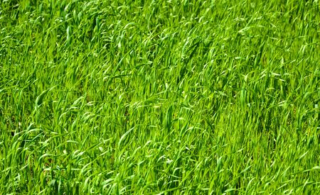 Abstract background with vivid green grass for your design