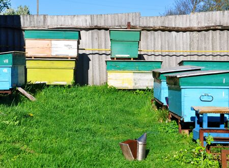 bee hives standing in an apiary on green grass Banco de Imagens
