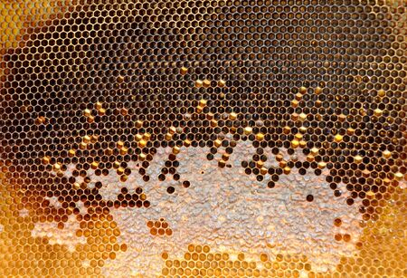 honeycombs with sealed cells