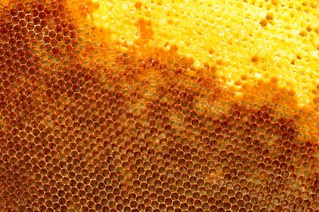 honeycomb filled with honey Banco de Imagens