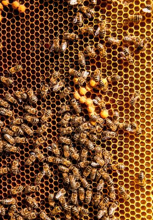 honeycomb with bee on it for your design Banco de Imagens