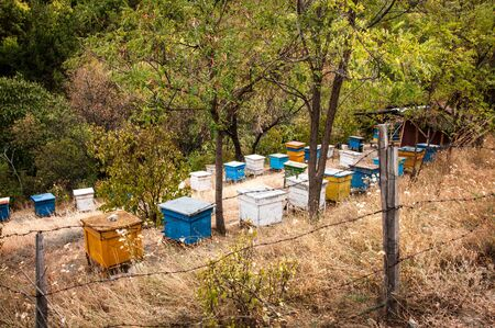Apiary. Wooden bee hives in the forest for your design