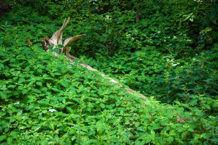 Dry trunk lies among the lush green vegetation Imagens