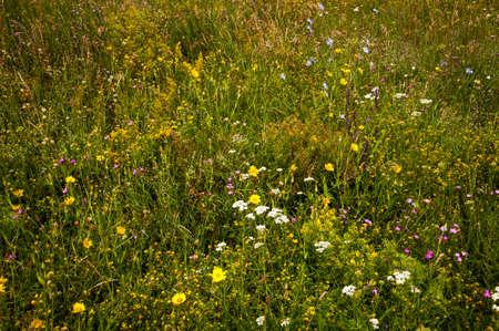 Beautiful wild flowers growing in the field Imagens
