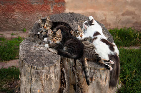 A group of cosy cats lying comfortably on an old stump. Quality image for your project 版權商用圖片