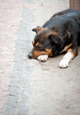 A stray dog is lying on the street. Quality image for your project
