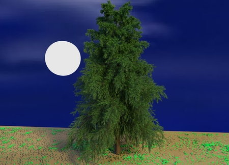 The Moon and an Old Pine Tree Imagens