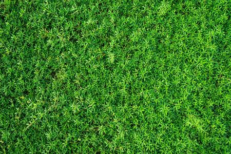 自然の緑の背景