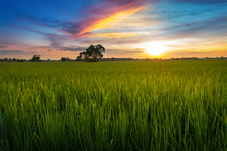 landscape photography sunset at the rice fields.