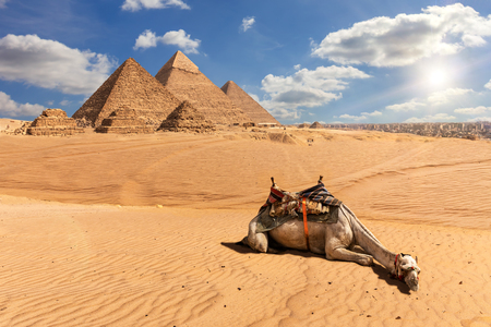 The Pyramids of Giza and a camel in the desert, Egypt