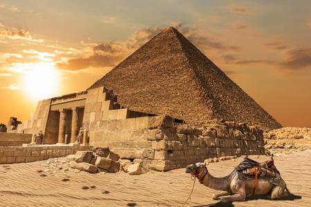 Ein Kamel in der Nähe der Mastaba von Seshemnefer IV und der Cheops-Pyramide, Gizeh, Ägypten