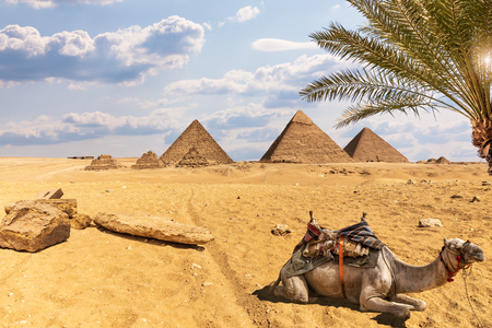 The Great Pyramids: desert of Giza scenery with a camel and palm trees, Egypt Banque d'images - 125030656
