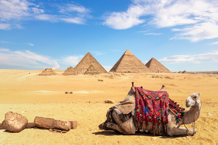 A camel in front of the Egyptian Pyramids, Giza, Egypt. Banque d'images - 125041254