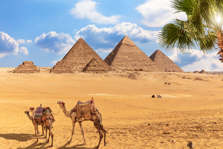 Giza Pyramid complex and camels walking nearby, Egypt. Banque d'images - 125041641