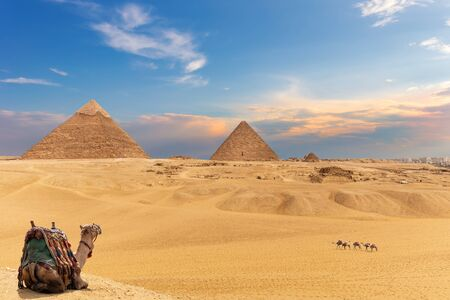 The Pyramids and camels, beautiful Giza desert view.