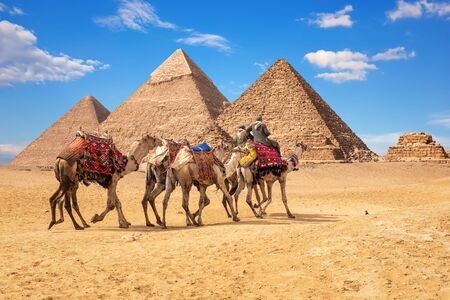 Bedouins on camels in front of the famous Giza Pyramids in Egypt Imagens