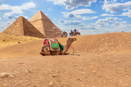 Camels by the Pyramids, desert scenery in Giza, Egypt.