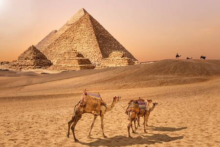 The Pyramids and camels in the Giza desert, Egypt. Imagens