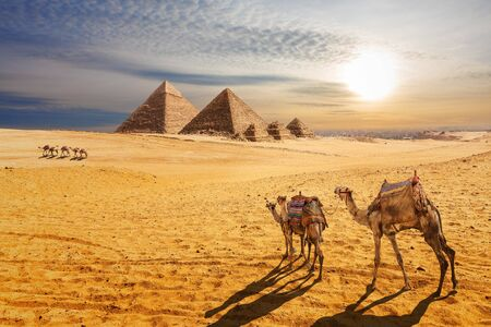 Sunset desert scenery, beautiful view of the Pyramids of Giza and camels, Egypt.
