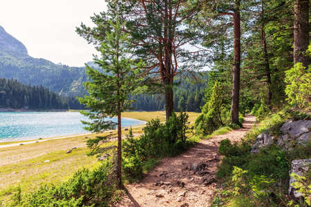 Path in the National park near the Black Lake in the mountains of Montenegro Imagens