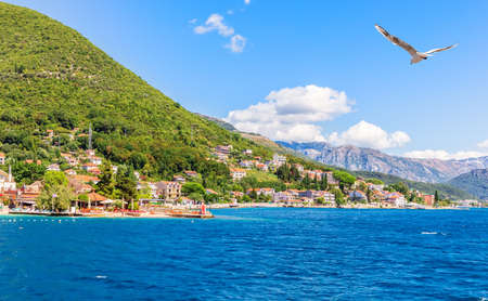 Seagull flying by the coast of the Adriatic sea in the Bay of Kotor, Montenegro. Stockfoto