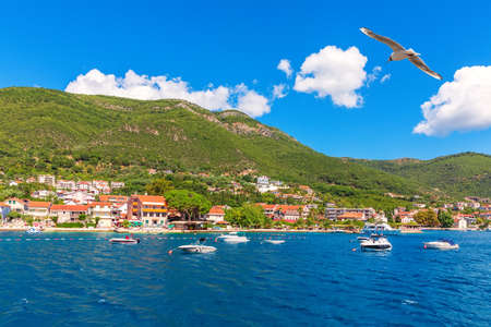 Seagull flying by Yachts and Villas in the Bay of Kotor, Adriaric coastline, Montenegro. Stockfoto